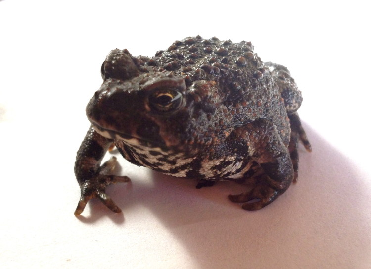 toad picture