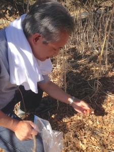 examining acorns