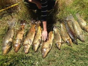 Carp caught by local fishermen in Pleasanton.