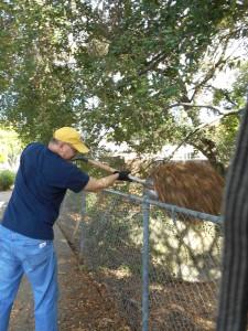 shoveling mulch