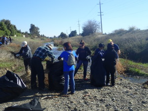 Volunteers hand weed Zone A
